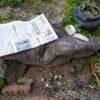 庭に石に座って朝日を浴びつつ新聞を読む