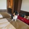 父と愛犬さくらとラビスタ霧島ヒルズさんに一泊旅行にきています。
