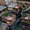 メダカ水槽のレイアウトが完成しました。メダカは沼過ぎるのでルールを決めて楽しんでいこうと思います。